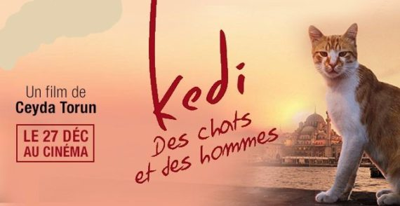 Kedi chats hommes Documentaire Film