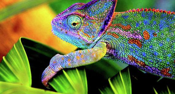 scientifiques turcs inventé matériau caméléon