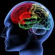 Sur la piste du cerveau