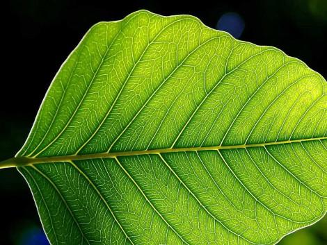Vers la photosynthèse artificielle?