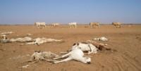 Réchauffement en Afrique: l'ONU continue de faire peur