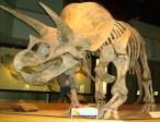 Viré après avoir découvert des tissus mous dans un squelette de dinosaure