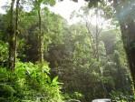 Nasa: les forêts absorbent plus de CO2 qu'on ne le pensait