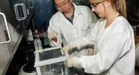 """Quête d'immortalité: modifier les télomères des chromosomes pour obtenir la """"vie éternelle"""""""