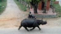 Népal: un rhinocéros en fuite tue une personne et en blesse six autres