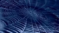 Des araignées aspergées de graphène et de nanotubes de carbone ont produit la fibre la plus résistante au monde
