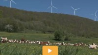 Energie éolienne: l'hystérie des brasseurs de vent Vidéo