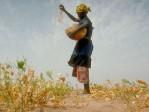 FAO: la faim dans le monde recule – malgré les catastrophes annoncées!