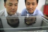 La vidéo: des scientifiques de l'Université de Séoul ont réussi à développer un robot «insecte»