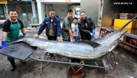 La photo:Des pêcheurs ont réussi à rapporter un espadon géant…