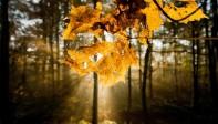 Des chercheurs danois ont réussi à inverser la photosynthèse: la source d'énergie du futur?