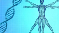 La biologie de synthèse veut «écrire» le premier génome humain