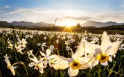 Christopher Booker: ce magnifique printemps est complètement normal