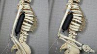 Un muscle artificiel capable de porter 1.000 fois son poids