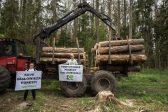 Comment le bostryche typographe est en train de détruire la forêt de Białowieża en Pologne avec le soutien des écologistes et de la Commission européenne