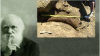 Terre jeune: le chrétien Mark Armitage licencié par l'université de Californie pour avoir découvert des tissus mous sur un dinosaure, ébranlé le dogme évolutionniste et questionné la chronologie longue de la Terre