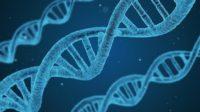 L'Europe accorde près de 3 millions de dollars à une étude turque sur l'ADN anatolien de l'ère néolithique