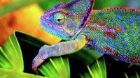 Des scientifiques turcs ont inventé un matériau caméléon