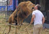 Le dernier dompteur anglais interdit de cirque avec ses deux lions et son tigre