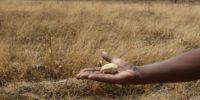 Le projet REDD+ de lutte contre le changement climatique de l'ONU menace un écosystème local en Ethiopie