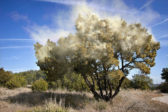 Le «réchauffement climatique» augmente les allergies – même quand il fait froid?