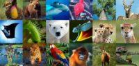 Evolution, vraiment? Une étude génétique d'envergure révèle que 90% des espèces animales sont apparues en même temps