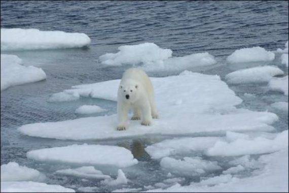 Ours glace climat