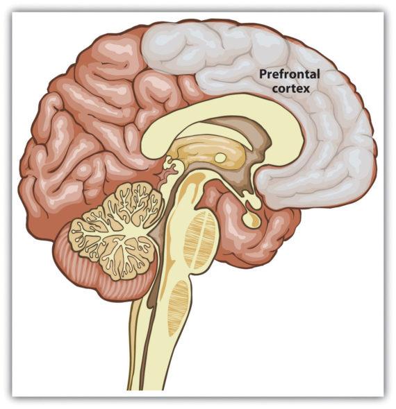 empecher comportement violent études imulation cortex préfrontal cerveau