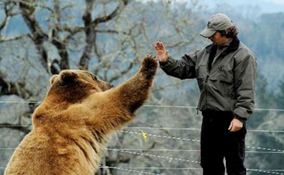 intelligence artificielle décoder langage animal traduire animaux
