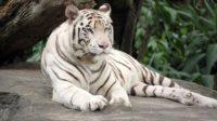 Rapport du WWF sur la faune sauvage: après le climat, les écolos enfourchent le cheval de la biodiversité