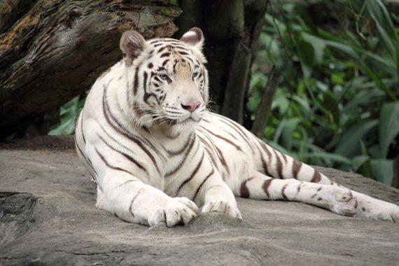 Rapport WWF Faune Sauvage Climat Ecolos Cheval Biodiversité