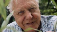 L'écologiste Sir David Attenborough salue la pilule contraceptive et appelle les femmes à prendre les rênes du monde