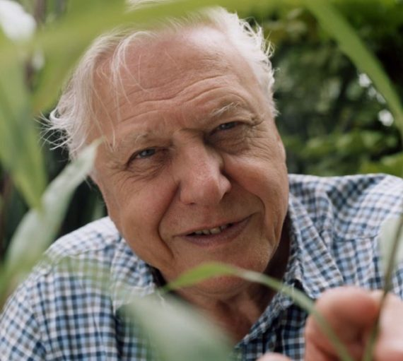 Sir David Attenborough pilule contraceptive femmes renes monde