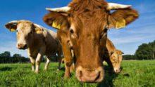 Les consommateurs devraient manger moins de viande pour lutter contre le changement climatique